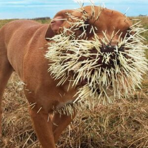 10 Animals That Were Complete Jerks To Others!